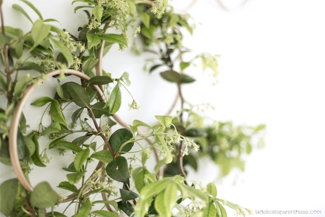 plantes grimpantes structure graphique murale DIY