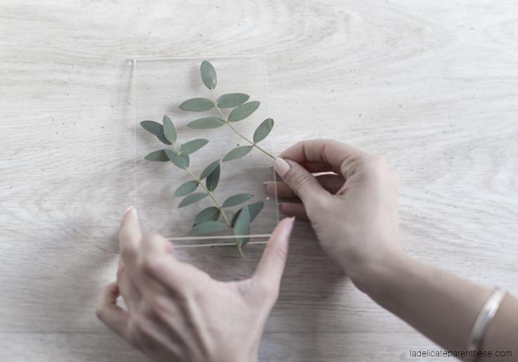 création DIY herbier transparent