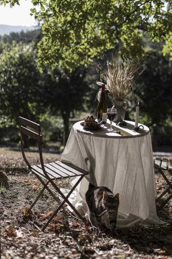 Diner automnal improvisé en pleine forêt pur un moment authentique hors du temps