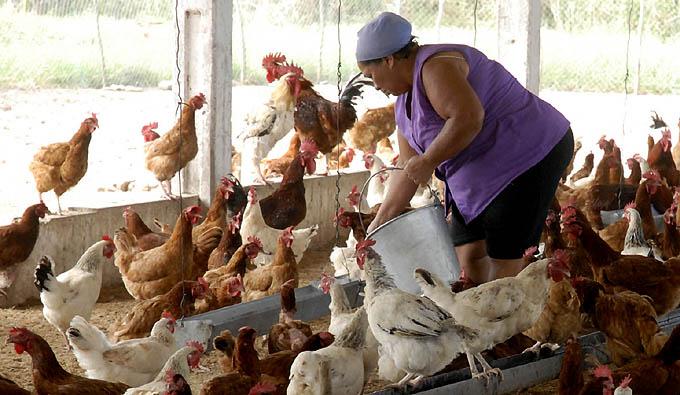 Resultado de imagen para mujer rural cubana
