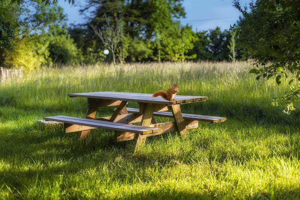 Table dans le parc pour votre pique nique