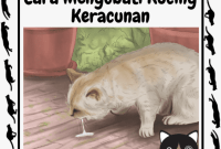 kucing keracunan