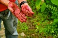 Nature's Paint: La Cuidad Perdida