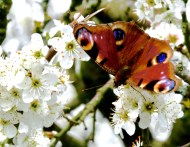 A butterfly rests for a while on a pungent tree