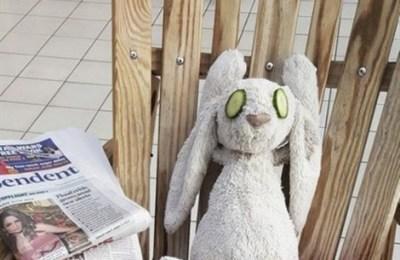Un coniglio in vacanza