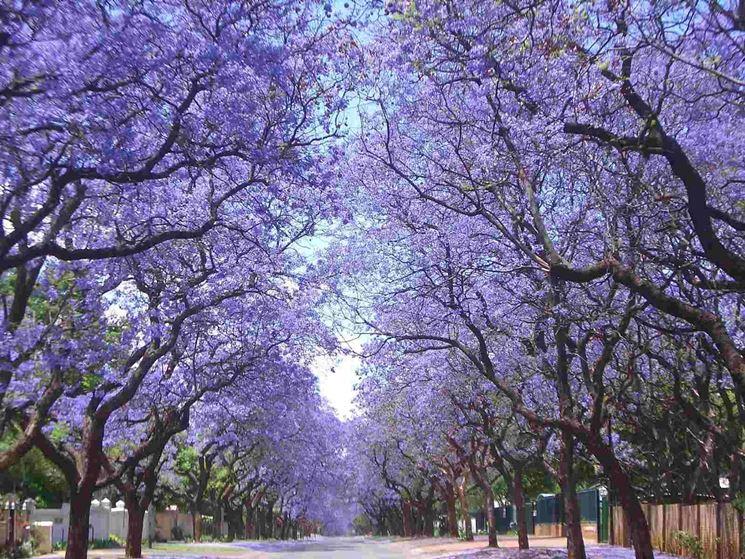 Giornata Europea del Giusto, a Bisceglie due alberi dedicati a Etty Hillesum e Charlotte Salomon