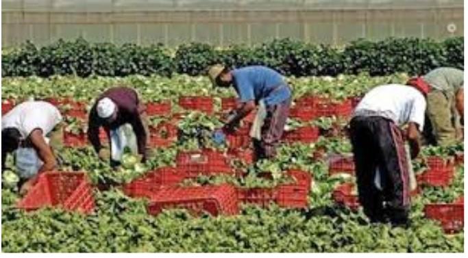 Coldiretti: a marzo perse 30mila giornate di lavoro nei campi