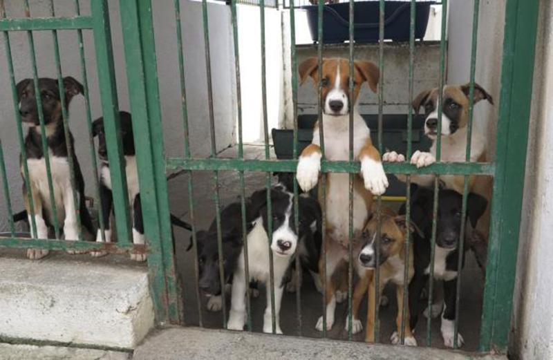 Gestione servizio comunale per cani: il Comune nomina Commissione Giudicatrice, ma solo una ditta partecipa