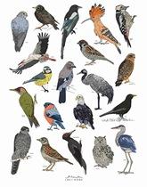 Plakat z rysunkiem ptaków