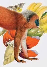 małpka Linneusza