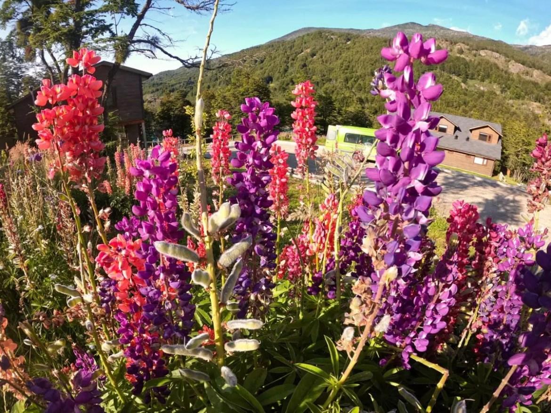 Parador Loberia fica no meio de um jardim com lupinos, flores que você encontra pelo caminho de sua viagem pela Carretera Austral - Andrea Miramontes / Lado B Viagem