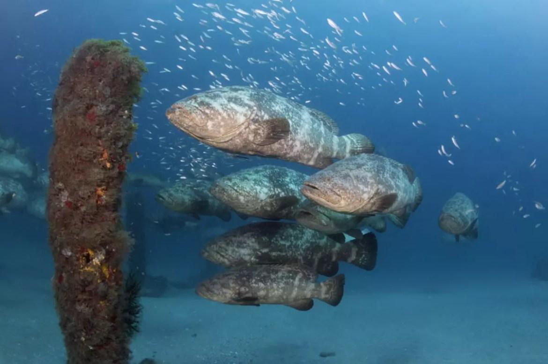Mesmo que não desça muitos metros é possível ver muita coisa, devido à transparência do mar - foto Jupiter Dive Center