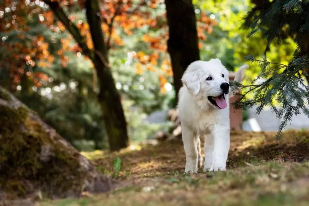 Pousadas nas montanhas têm muito verde para passeios com o dog