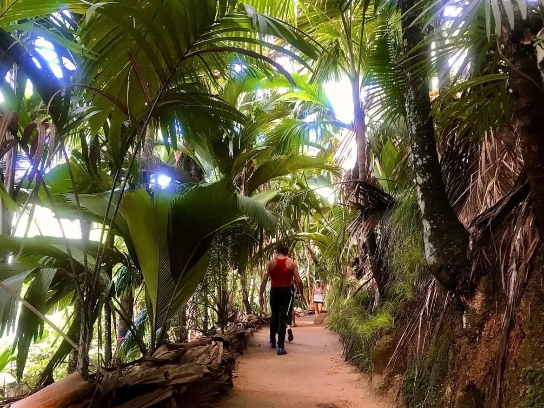 vallee de mai em seychelles
