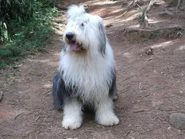 cachorro monte verde