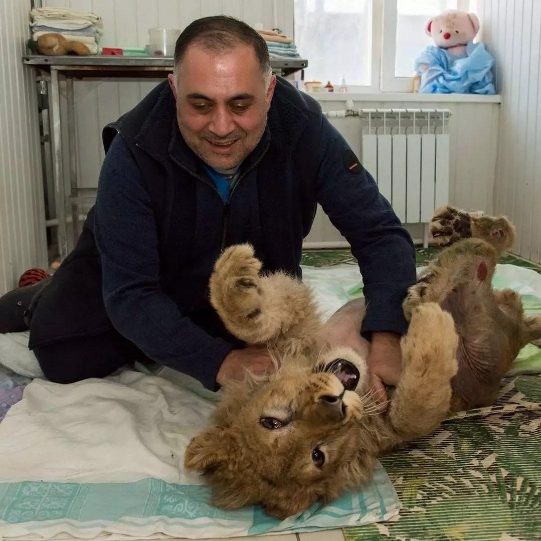 lion Karen Dallakyan