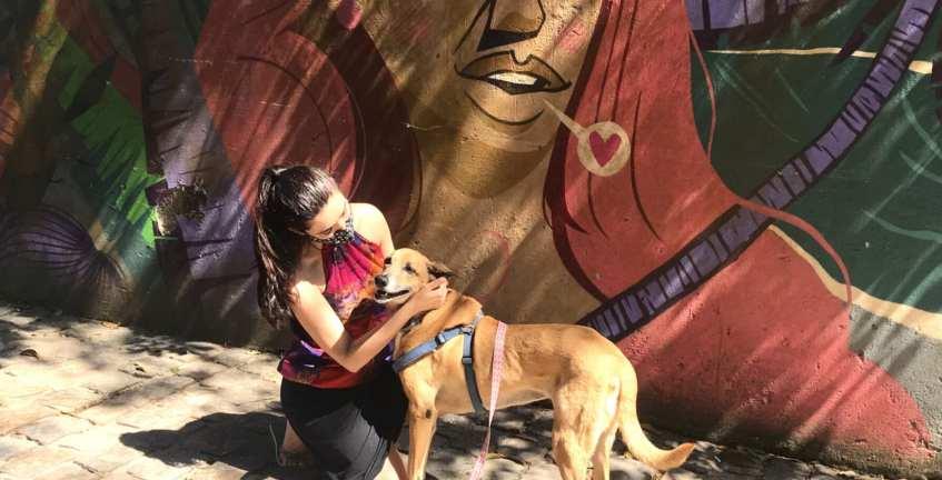 Maresias andrea miramontes pet friendly-beco mulher maravilha