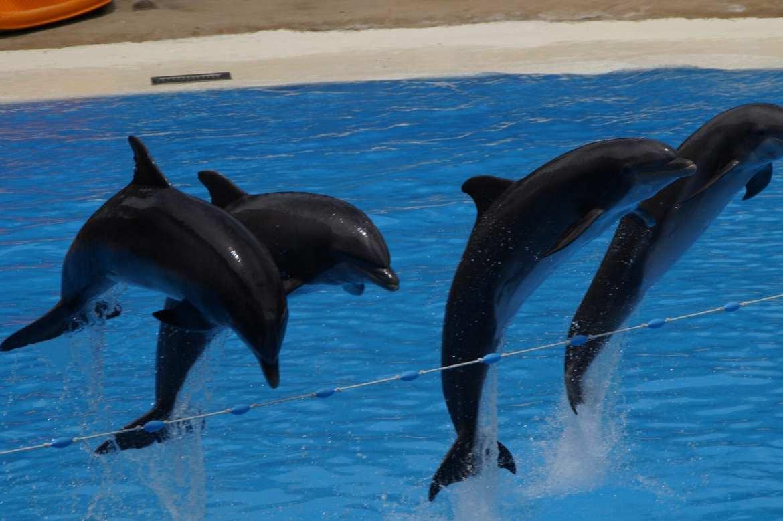 dolphins-crueldade-turismo