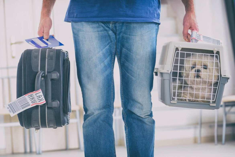 Azul embarca animais de até 5 kg (com a caixa) na cabine - Foto: vemvoar.voeazul