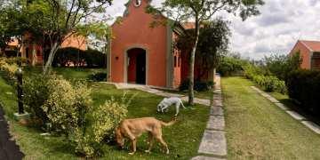 Maga e Juju do Patas ao Alto no hotel pet friendly Villa Rossa - foto Andrea Miramontes / Lado B Viagem