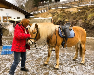 Haflingers are small but solid horses