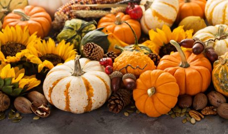 Fall still life with pumpkins, nuts, wheat and corn