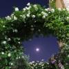 2016/5/12 月・木星・満開のバラ