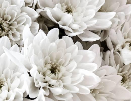 Blumen Kranz binden DIY Chrysantheme Pina Colada Peacezeichcen Haarkranz