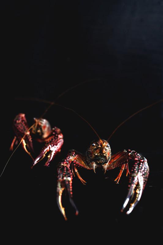 mala-butter-crayfish27