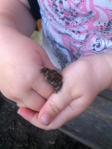 little toads