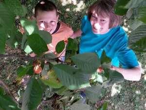 glean cherries