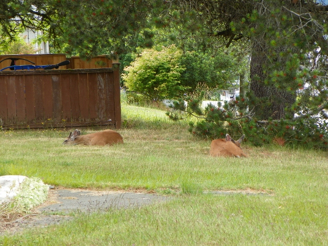 Sunsets & lazy deer days 051 (640x480)