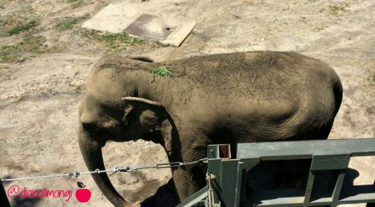 elephant bronx zoo 2
