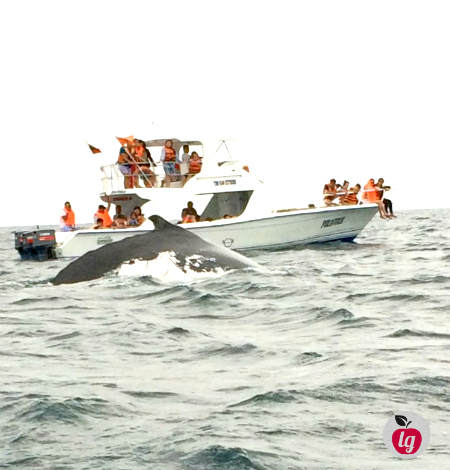 Whale watching in Ecuador 1