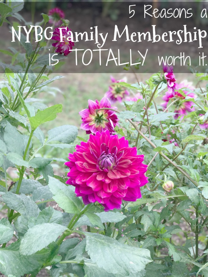 NYBG Family Membership