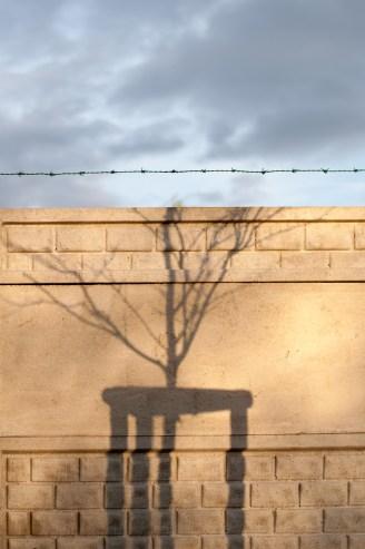 Žít do stovky: Zpívání stromům