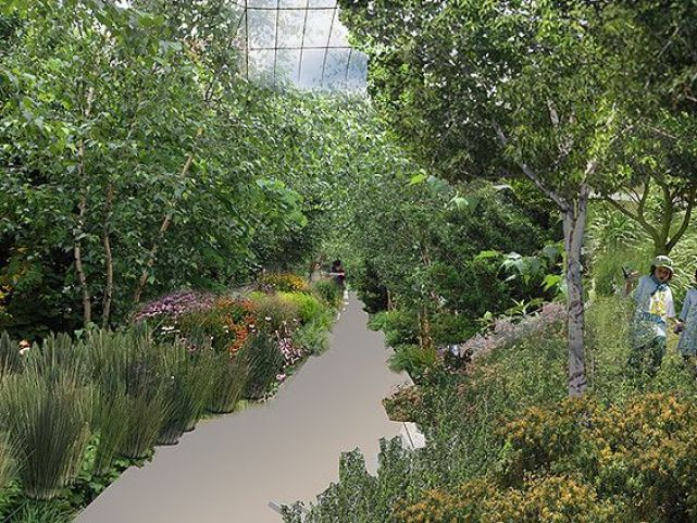 Swale food forest interior