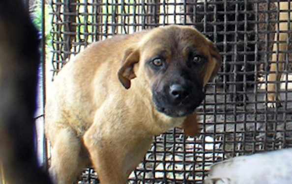 SIGN: Pass Los Angeles Resolution Calling for Asian Dog Meat Ban