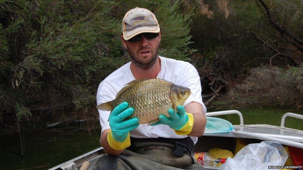 large goldfish