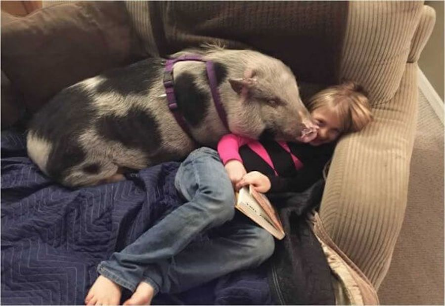 Pig Beaten with Crowbar and Left to Die Gets Second Chance at Life