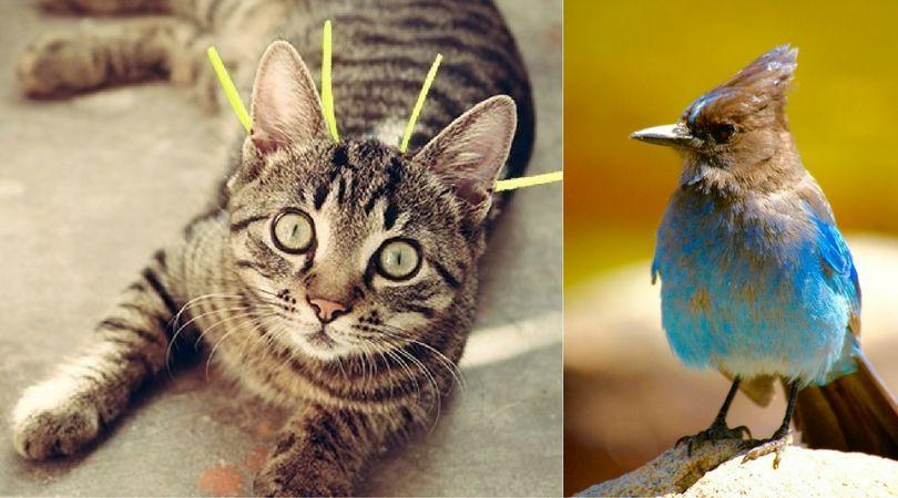 chripon cat collar stop bird killing