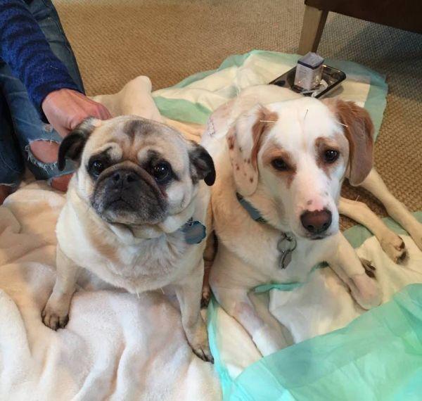 Photo: Facebook/Animal Acupuncture