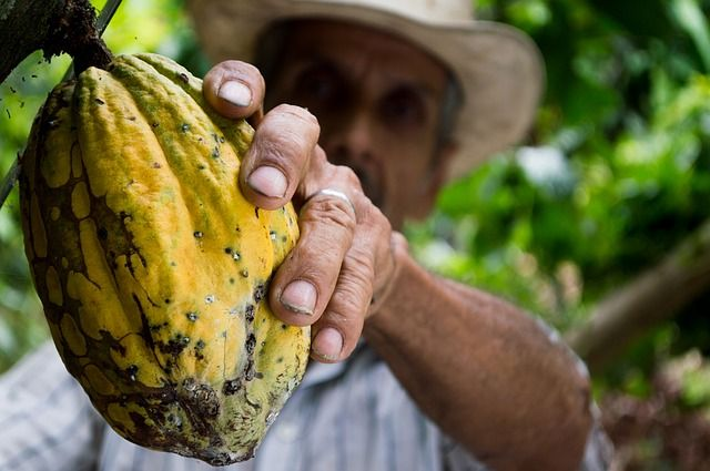WOrker on farm holding out a papaya