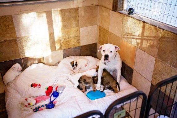 Photo: Luvable Dog Rescue