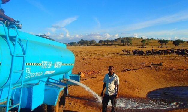 Hero Travels for Hours Each Day Bringing Water to Drought-Stricken Animals