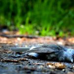 Yet Another Chevron Oil Pipeline Spills, Killing Native Wildlife