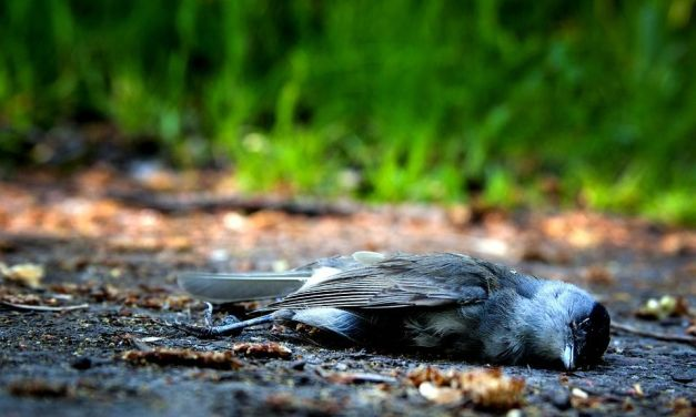 Yet Another Chevron Oil Pipeline Spills, Killing Native Wildlife