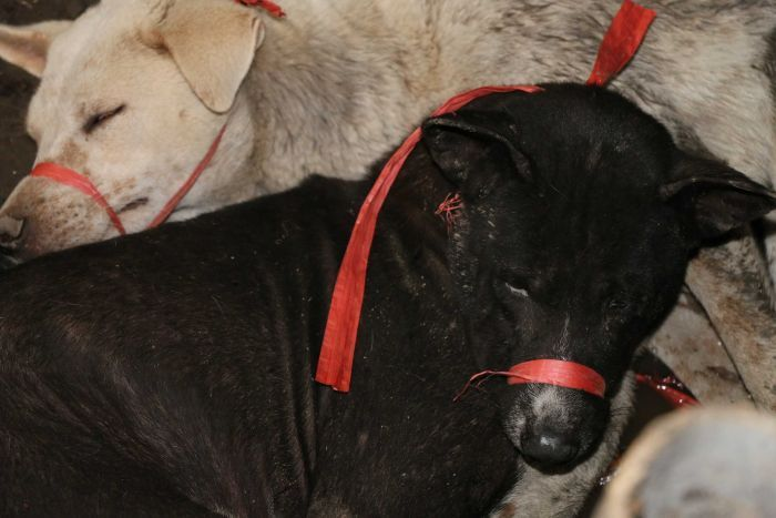 Victory: Bali Governor Bans Sale of Dog Meat