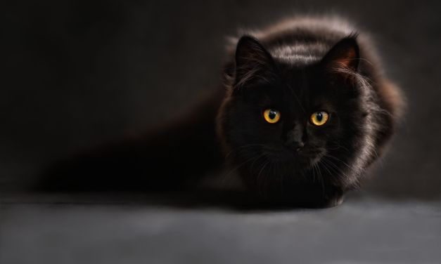 Here's What Happened When the CIA Tried to Turn Cats into Spies