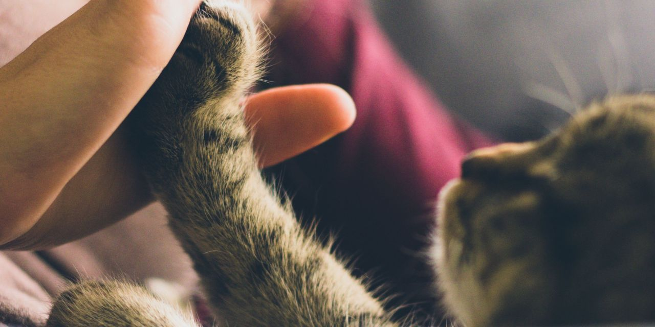 How Having an Animal Companion Makes You A Healthier Human
